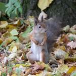 small pretty squirell